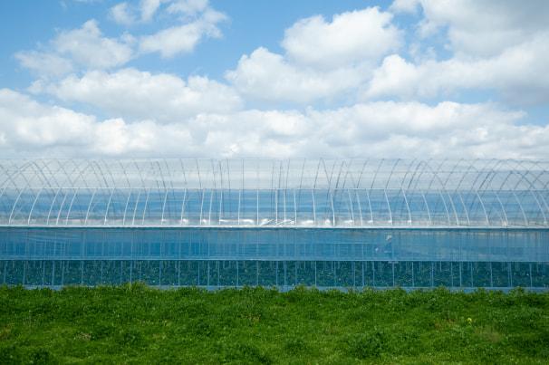 農業用ビニールハウスの風景