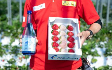 イチゴ「真紅の美鈴」と幸-SACHI-を手に持つ様子